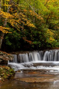 Camp Creek State Forest